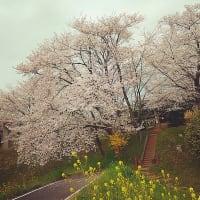 ♪43「Season's Greeting 〜2020春」