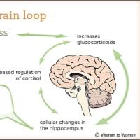 〔メモ〕 ストレスが脳に及ぼす影響