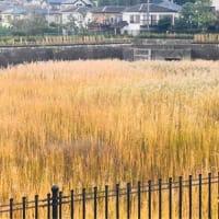 秋色の雨水調整池