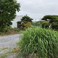 一週間での草花の成長