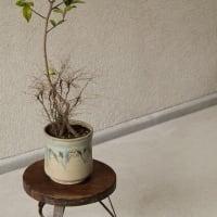 山茶花も咲きすすみ