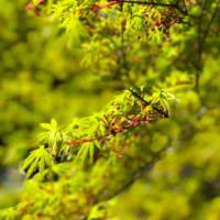 衣笠山の楓、観音崎の謎の花