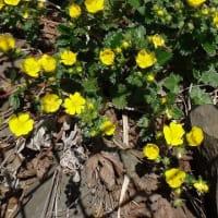 13.花の浮島 礼文を巡る