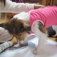 犬の介護服
