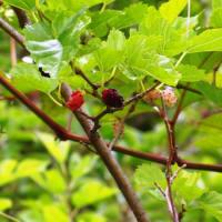 チョウチョウ,木イチゴ,ミニハーモニカ。