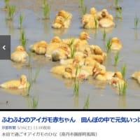 ふわふわkawaii京都新聞