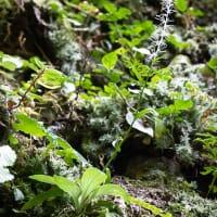 岩登りと希少植物の観察