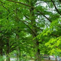 2019年濃緑の京都・舞鶴自然文化園の壁紙(計63枚)