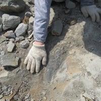 化石でワンダー探検隊・土塩層~里山体験プログラム~