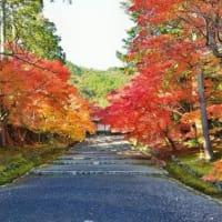 秋の京都 奥嵯峨を歩いてみませんか? 小倉山二尊院
