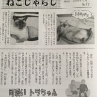 保護猫と暮す、その楽しさを知ってほしい!