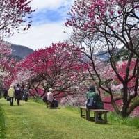 桜の開花があちらこちらから聞こえてきました
