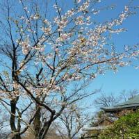 春、つれづれに・・・