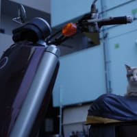 街猫春雷(シュンライノコロノマチネコ)② Okinawan Cats #2234