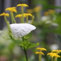 ベランダの花々
