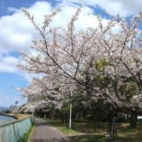 お花見散歩