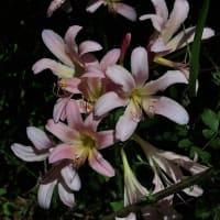 芸北花巡り~夏から秋へ(その1)