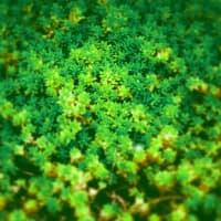 緑の星の森
