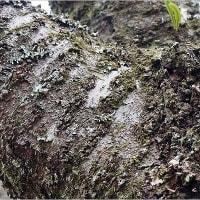 早春の植物探索 ~ 房総