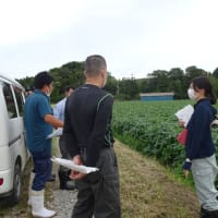 鳴瀬地区水稲乾田直播・大豆現地検討会が開催されました。