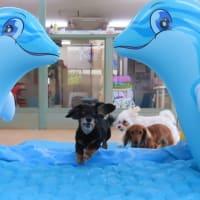 7/30(金)の幼稚園は満席となりました。<m(__)m>  犬のしつけ教室@アロハドギー