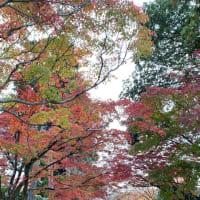 今年の紅葉、、、その3「真如堂」「黒谷さん」