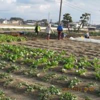 24.12.23 今年最後の収穫
