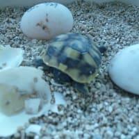 3個目の卵孵化しました。