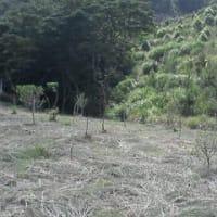 里山の草刈り