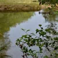 4937 池の畔