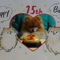 13日は、ポンちゃんの15回目のお誕生日でした。