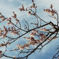 いつの間にかの「春」