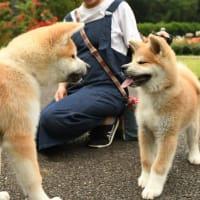 秋田犬パラダイスー♪皆さんありがとうございました~(^^)