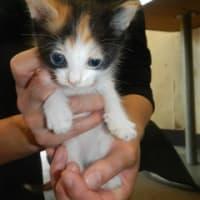 10月の猫の里親会・第1日曜日は、中止とさせていただきます。