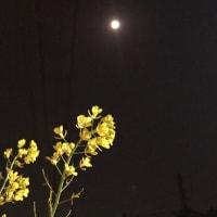 昼間のお使い夜の月