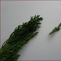 庭の植物で作るリース★トナカイ正ちゃん