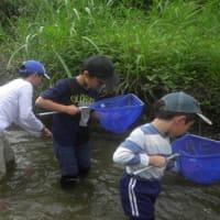 わくわく水生生物調査隊 2019