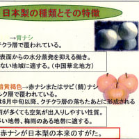 2012 広葉樹文化協会秋の行事1