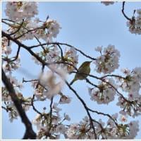 瑞穂公園の野鳥ー04/03