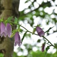 里山散策の草花、花木