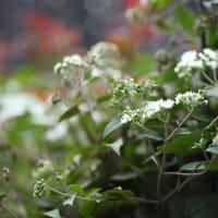 9月中旬から彼岸前後に咲く花たち