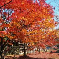 紅葉のなごり 常寂光寺、落柿舎、二尊院、清涼寺