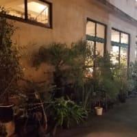バルセロナの夜 in 上野