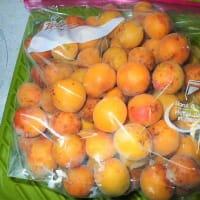 <食べきりのすすめ>保存編(下)冷凍の極意/完熟梅を収穫。今年最後の冷蔵デコポン。