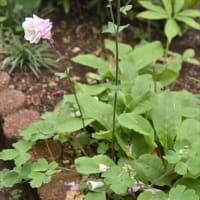 庭 の 花 (No 2378)