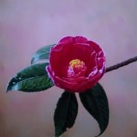 『椿』油彩画