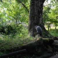 一般質問壇上からの質問、鳥、稽古