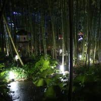 男鹿・雲昌寺のあじさいライトアップ