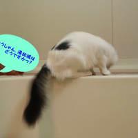 猫にお風呂は必要かなぁ・・・