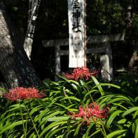 2020.10.2 花の窟 秋季例大祭(熊野市有馬町)